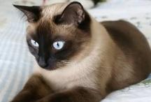 Pets  / by Adventuress Heart