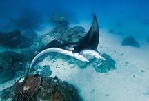 Australia / Australia Scuba Diving http://bit.ly/X295E6 / by PADI