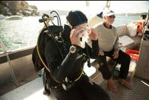 Scuba Diver Jobs / Find out more about the career you could have as a PADI Diver or Instructor. / by PADI