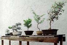♥ bonsai