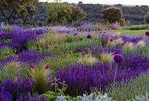 jardins et plantes jolies