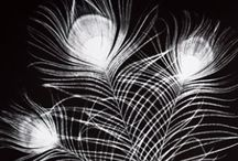 Photograms (cameraless photography)