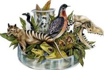 Biodiversity / Join this board for updates and news about biodiversity. Enjoy news regarding ecosystems and natural habitats, as well as great photos of wildlife and landscapes.   http://ecowatch.com/category/biodiversity/ / by EcoWatch