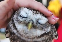 All Creatures Great & Small / But mostly owls... / by Karen Priddy