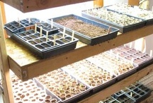 Seed Starting and Growing