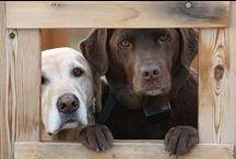 Собаки / Единственное существо на земле, которое любит тебя больше, чем себя.