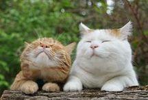 Кошки / Если у вас есть кошка, вы возвращаетесь не в дом, а домой.  (Пэм Браун)