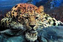 Животные планеты / показывает животных в непосредственной среде обитания