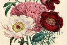Ботанические картинки