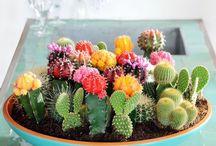 My garden:-)