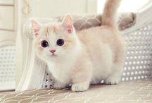 Cat:-)