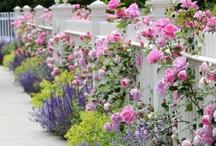 FLOWER Garden/Decor / by Tammy Turner