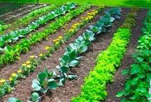 Veggie Garden / by Tammy Turner