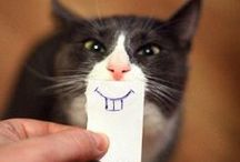 Cats of the Internet / We love cats, cats love us and the Internet loves cats even more...