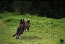 K9 Heaven Big Dog Warriors - 'The Heavy Cavalry' Getting down to business! / Photo's of our big dog members putting mother nature in her place and letting loose, be who you really are!!
