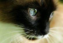 Cats - part 2