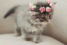 Cats+Kittens(Jasmine)