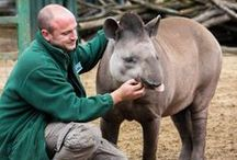 Meet The Team. / Paradise Wildlife Park is run by a #fabzoolus team of animal keepers and dedicated staff.