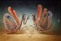 Insects I think are interesting / Insects, bugs, etc., from all over / by Susan Pogany