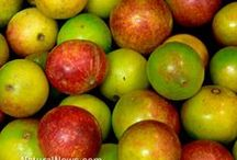 Camu Camu - an Amazonian superfood