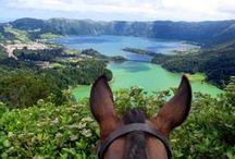 Paardrijvakantie ideeën / Foto's met betrekking tot het delen en geven van ideeën omtrent paardrijvakantie wereldwijd. Vanaf maart 2016 via www.paardrijvakanties.nl