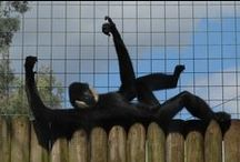 Playful Primates. / Here at Paradise Wildlife Park we have the largest collection of small monkeys in the UK.