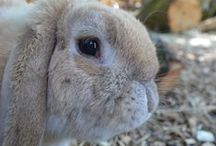 Farmyard Friends / Here at Paradise Wildlife Park we have a lovely Farmyard located in the main animal area. See up close our beautiful Shetland Ponies, Guinea Pigs, Ouessant Sheep, Chinchillas and many more.