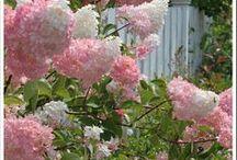 Flores e jardins que eu amo / Sobre a beleza que a natureza nos proporciona. O colorido das flores.