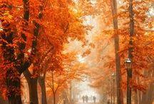 E - autumn