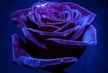 ~ Wonderful flowers ~