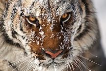 Wildlife / by Linda Denton