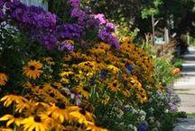 Garden Ideas / by Margaret Dixon