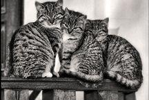 Miau,miau,miau / by empress josephine