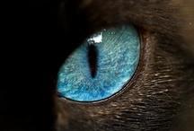 ...eyes