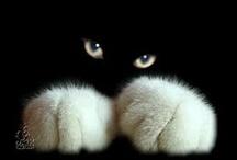 ...paws