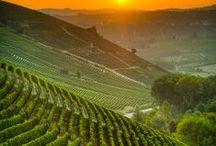 Uvas, Vinhos e Vinícolas / O vinho é uma das mais antigas bebidas criadas pelo homem e apreciada desde antes do ano 6000 a.C. O vinho sobreviveu ao tempo devido ao seu sabor inigualável e fragrância agradável ao paladar.