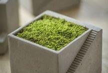 Moss / Moss-Duh. / by Ramon Fonseca
