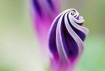Bloom / Flowers / by Ramon Fonseca