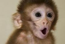 Monkey Bizness / I love Monkeys!!!!!!!!!!!! / by Kristine Joseph