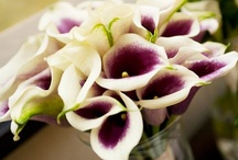 Wedding Flowers / by Wendy Summers