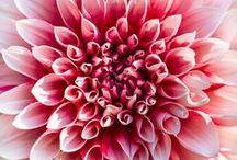 Voor fleur in't leven / Bij Walter Van Gastel kan u terecht voor verse bloemen en planten. Onze meester-bloembinders maken voor u professioneel boeketten en bloemstukken naar uw wensen.   Walter Van Gastel zorgt graag voor fleur in't leven!