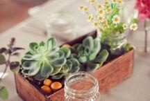 plants and set
