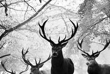 Animal / Photos of animals