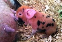 Baby Animals at Farmer Palmer's Farm Park / Farmer Palmer's animals are great mums! Here we share lots of new babies as they are born throughout the year. Farmer Palmer's Farm Park, Dorset.