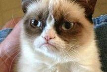 Grumpy cat / Grump cat quotes and negativity