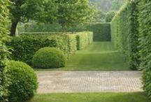 Hedges / Plants