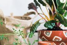Plants -Indoor and Outdoor / Greenery is refreshing, inside and outside. Some elgant plants and ideas to incorporate them in the home.