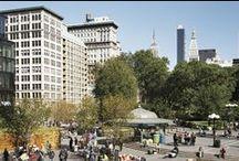 New York University / university