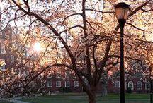 Yale University / University