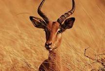 ✕ African Safari ✕
